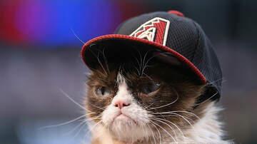 Randy McCarten - Sad News Today.  Grumpy Cat has Passed Away