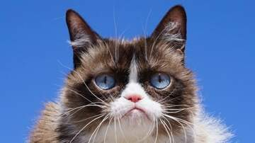 Heather Burnside - Paw Purr Azzi: Grumpy Cat Has Died, But The Memes Live On