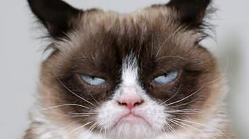 Angie Martinez - Internet Sensation Grumpy Cat Dead at 7
