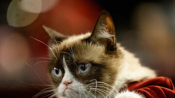 Gabby Diaz - Twitter mourns the death of Grumpy Cat