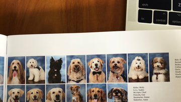 National News - Parkland Students Devote Page in Yearbook for Therapy Dogs