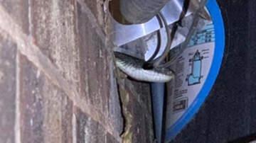 Noticias Nacionales - Oklahoma Man Shocked To Find Snake Crawling Into His Dryer