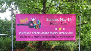 Photos - WOOFSTOCK 2019 @ Marin Humane in Novato 05.19.19