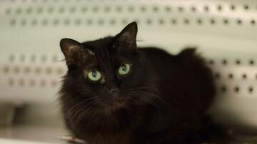 None - LCHS Pet of the Week: Princess