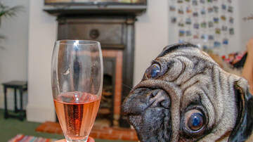 Courtney Lane - Movie theater lets you bring your dog AND has endless wine!
