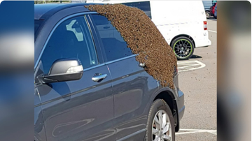 BC - Frightening Photos Show Huge Swarm Of Bees Engulfing Car