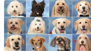 None - Therapy dogs at  Stoneman Douglas High School get their own yearbook page