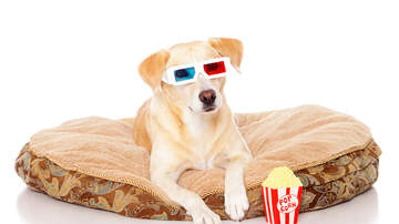 Amanda Mae - A Dog-Friendly Movie Theater Just Opened in Texas