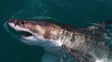 Jim Kerr Rock & Roll Morning Show - Great White Off Jersey Coast Steals Fishing Trip Bait