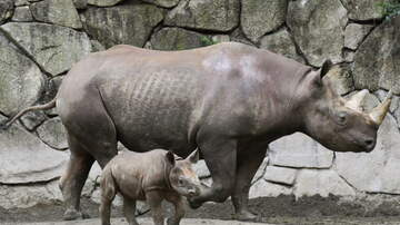 Meag Taylor - Babies Gone Wild at Zoo Miami!