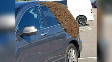 Corey & Patrick In The Morning - Frightening photos show huge swarm of bees engulfing car