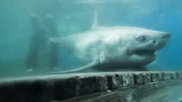 National News - Ten-Foot Great White Shark Being Tracked Off The Coast Of Long Island