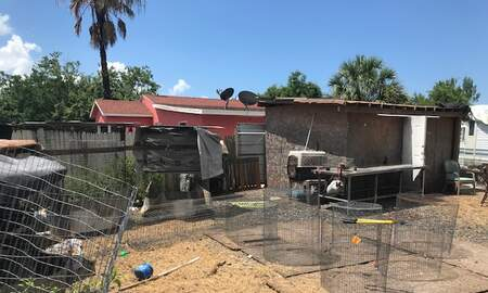 Florida News - Florida Roosters Get a Break... Cockfighting Ring Busted Near Tampa
