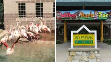 Klinger - A Zoo Had To Euthanize A Flamingo After Kid Threw Rock And Injured Leg