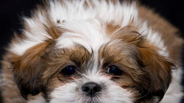 Lori - Here's The Scientific Reason We Can't Resist Puppy Dog Eyes