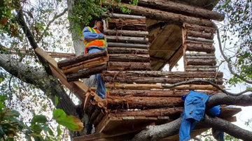 Weird News - Burglary Suspect Found Living in 'Well-Built and Modern' Tree House