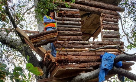 Weird, Odd and Bizarre News - Burglary Suspect Found Living in 'Well-Built and Modern' Tree House