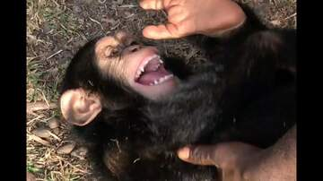 Frank Bell - These Chimps Will Give You The Warm Fuzzies