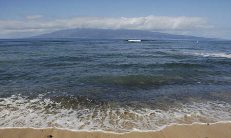 National News - California Man Killed in Hawaii Shark Attack