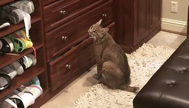 Woman Seeks Owners Of Cat She Found, Realizes She Made A Big Mistake