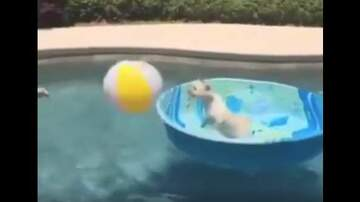 Frank Bell - Dog Plays Water Volleyball