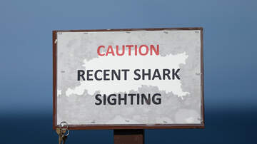 Charlotte News - New Bern teen's leg amputated after shark attack