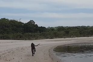 Man Rescues Dog He Found on Deserted Island