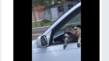 Lynchburg-Roanoke Local News -  A raccoon hitches a ride