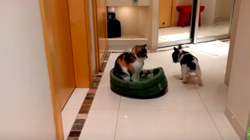 JB - ***VIDEO*** Place Your Bets: Puppy Tries To Reclaim Bed From Cat