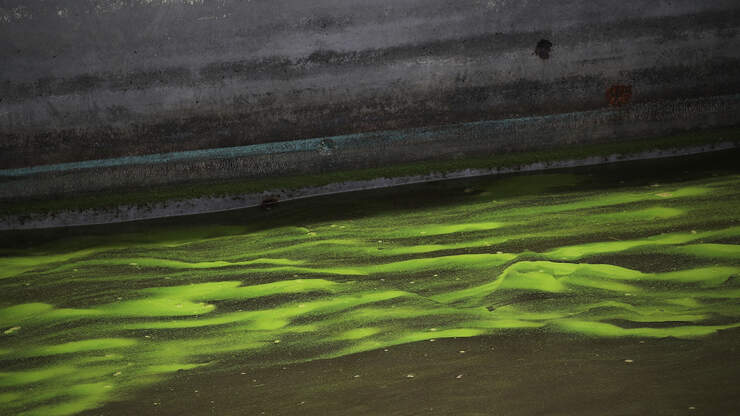 Another Health Alert Issued Over Toxic Algae In Palm Beach County Waters
