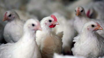 1450 WKIP News Feed - Pieces Of Plastics Found In Chicken Products, Leads To Recall