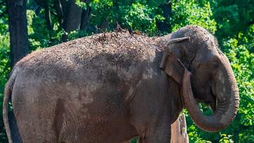 Woody and Jim - Tennessee Man Uses Elephant To Help Propose To His Girlfriend