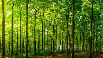 Shawn Carey - Virtual Walk In The Woods
