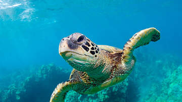 Florida News - Protecting Our Sea Turtles Ahead Of World Sea Turtle Day