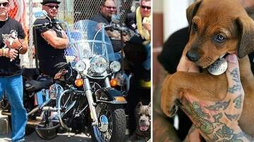 Suzette - Bike Gang Rescues Animals From Violent Owners & Breaks Up Dog Fight Rings