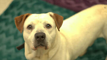 Pet of the Week - Pet of the Week: Carlos - ADOPTED!!!