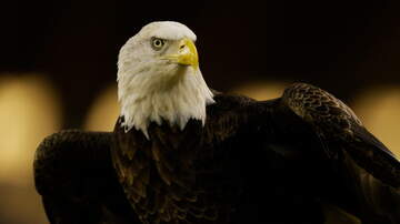 Woody and Jim - Bald Eagles Brought To Nashville's Radnor Lake