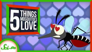 Call me Furious...... Mr. Furious! - Why you're SO ATTRACTIVE…to Mosquitos
