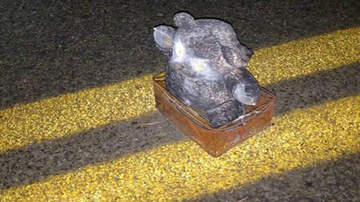 National News - FBI Releases Photo Of Teddy Bear Bomb Meant To Harm Children