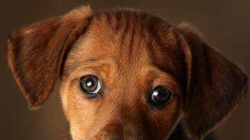 Patty Rodriguez - 'Puppy Eyes' Have Evolved to Appeal to Humans