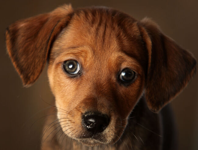 'puppy dog eyes'