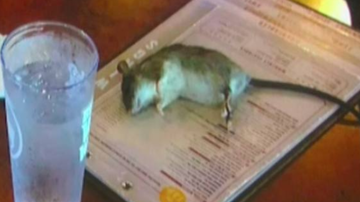Home Grown Radio - Rat Drops From A Ceiling Onto A Customer's Menu At Buffalo Wild Wings