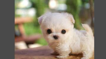 Frank Bell - The Cutest Puppies You'll Ever See