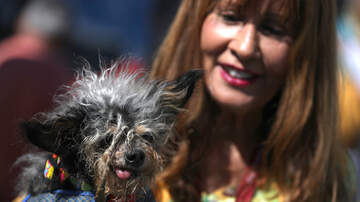 Thor - The World's Uglist Dog was crowned and YIKES!!!!
