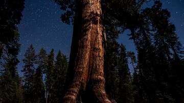 Bull Buzz - Help identify couple in Yosemite engagement photo