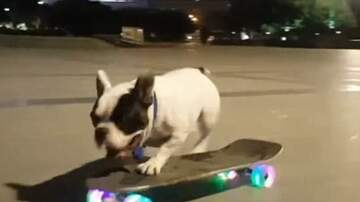 Monsters - BECAUSE SKATEBOARDING DOGS ARE AWESOME!!!!