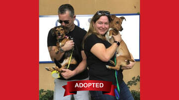 Wags with Wendy - Wags with Wendy - Nygma ADOPTED!