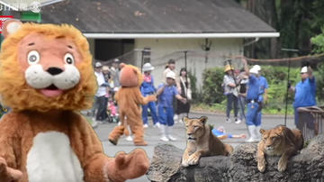 Weird, Odd and Bizarre News - Japanese Zoo Holds Absurd Lion Escape Drill And Even The Lions Are Confused