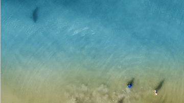 Weird, Odd and Bizarre News - Dad Uses Drone to Snap Photo Of Sharks Swimming Near His Family
