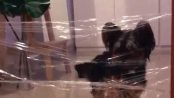 Tige and Daniel - Dogs Fooled By Plastic Wrap In Invisible Challenge